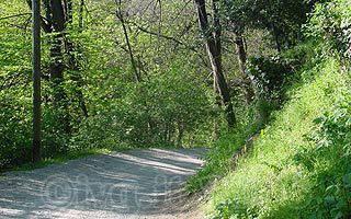 bosco sentiero