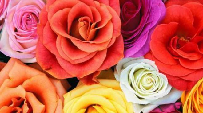 Fiori florovivaismo coltivazioni