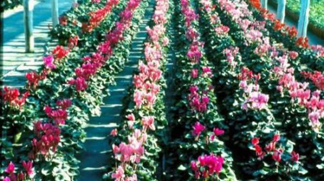Floricoltura piante fiori