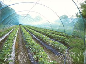 Agricoltura serra