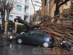 Alassio - albero caduto su auto