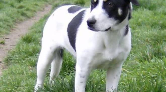 Macchia, cane generoso, cerca casa
