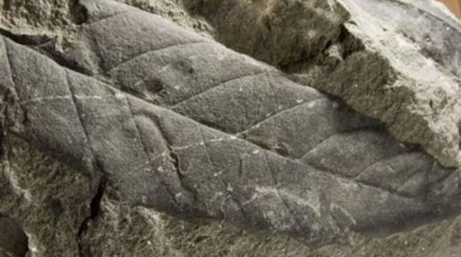 Sassello - parco del Beigua - foglia fossile