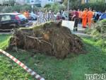 Alassio - albero precipitato