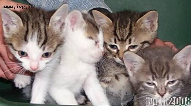 Andora, sei gattini abbandonati in un cassonetto
