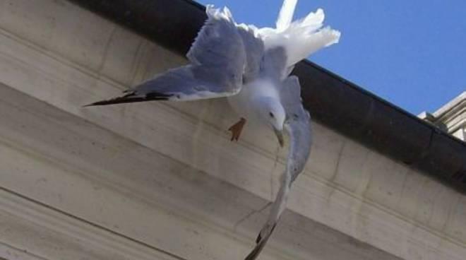 Savona, gabbiano ferito soccorso sul tetto di Palazzo Sisto
