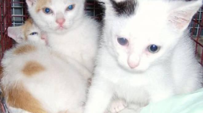 Gattini abbandonati a Magliolo