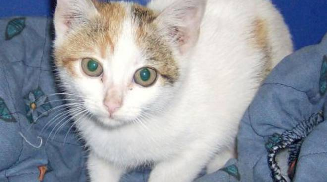 Vado, gattina abbandonata nel greto del torrente Segno