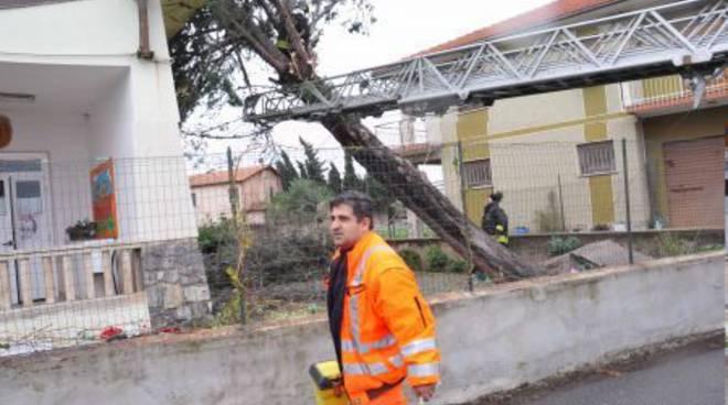 Albenga - albero caduto su scuola