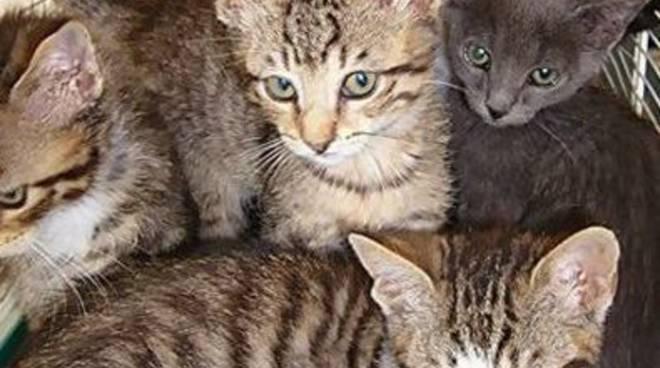 Gattini abbandonati soccorsi dall'Enpa