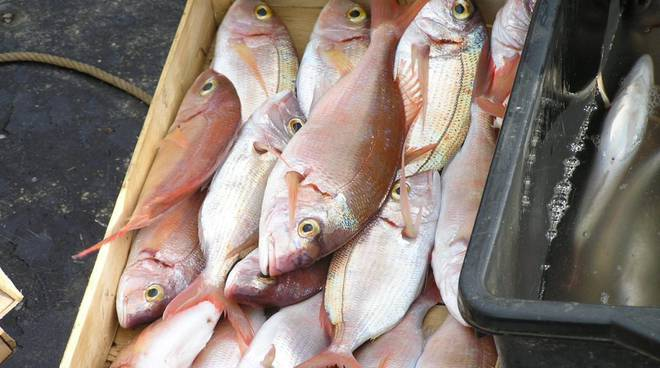 pesce pescato