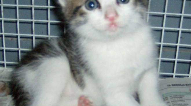Savona, gattino abbandonato in via Garibaldi