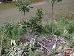 Taglio di piante lungo il Letimbro: l'Enpa protesta - via Garroni
