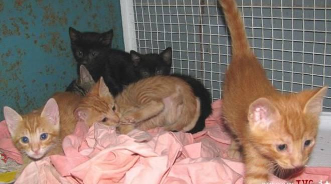 Gattini abbandonati a Varazze