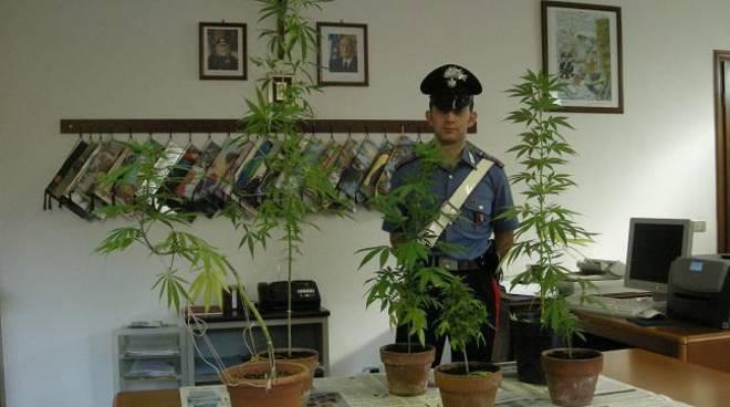 Scoperta coltivazione marijuana in casa