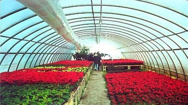 Coltivazioni in serra