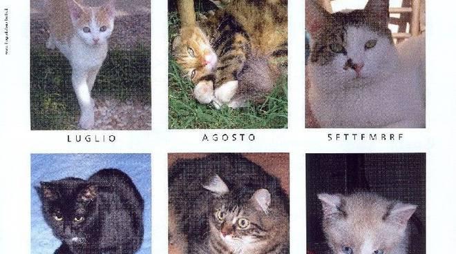 Enpa Albenga- calendario felino