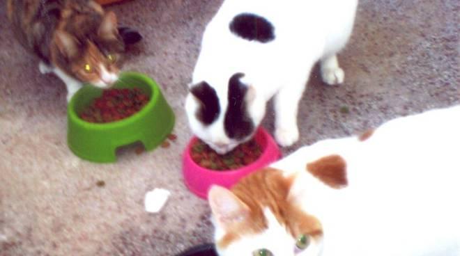 gattini nonna G.