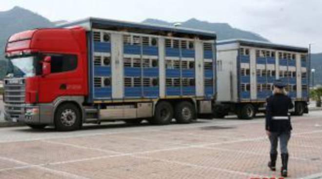 Tir trasporto animali