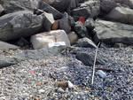 Albissola - degrado, sporcizia spiaggia - mareggiata