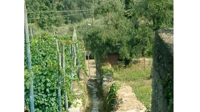 FAI - mulattiere di Liguria
