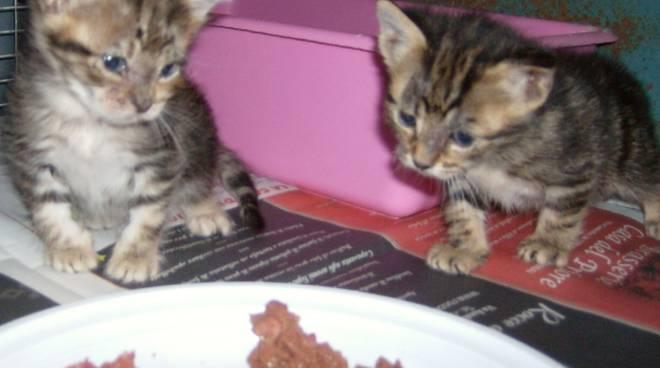 gattini abbandonati a millesimo