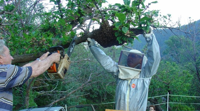 api cascina
