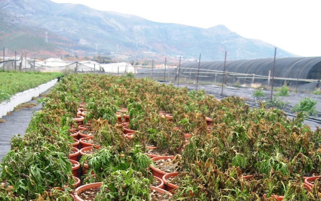 danni maltempo agricoltura