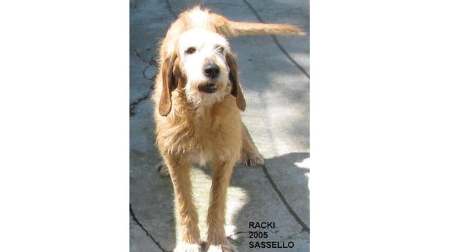 Racky cane Sassello