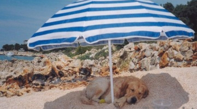 spiaggia cane