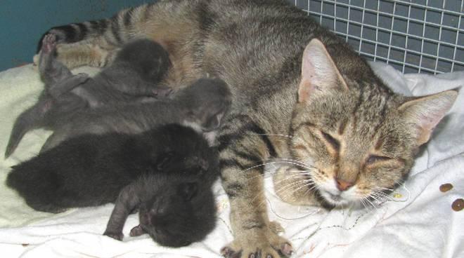 gatti abbandonati a Stella