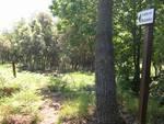 bergeggi - sentiero botanico