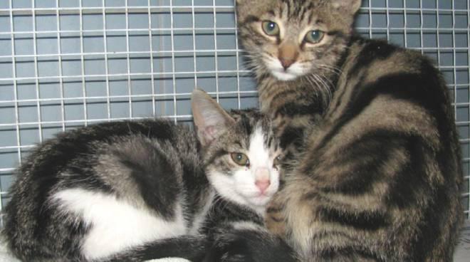 gatti abbandonati a Vezzi Portio