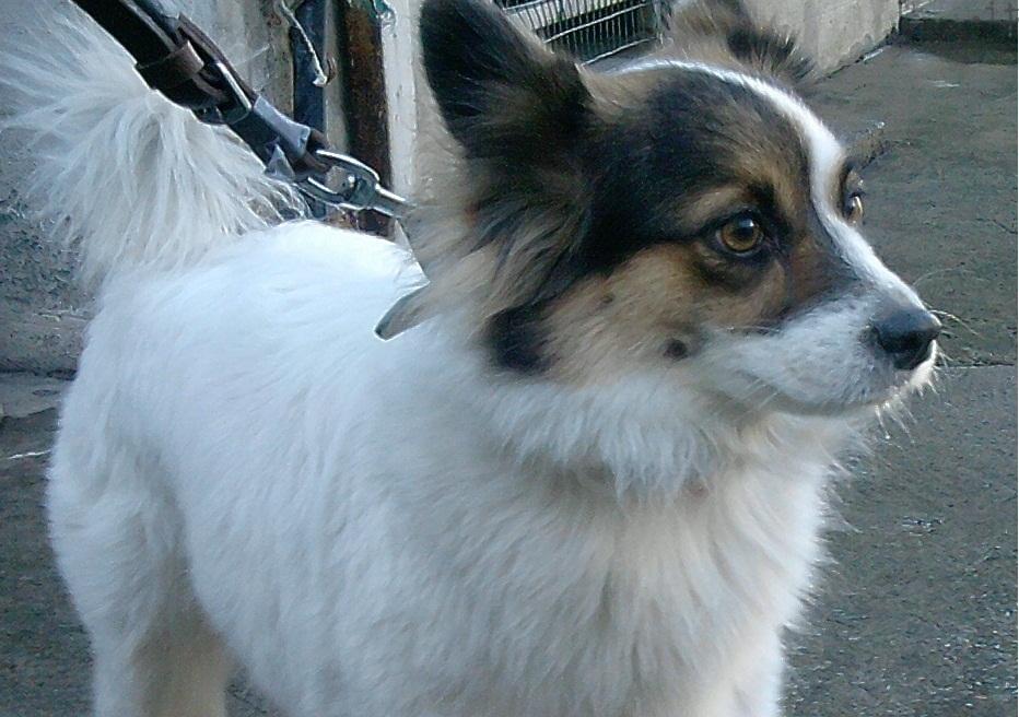 cane smarrito al Basko Savona