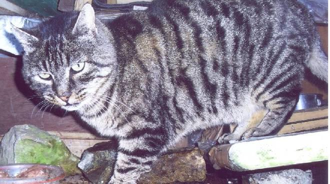 gattino stella