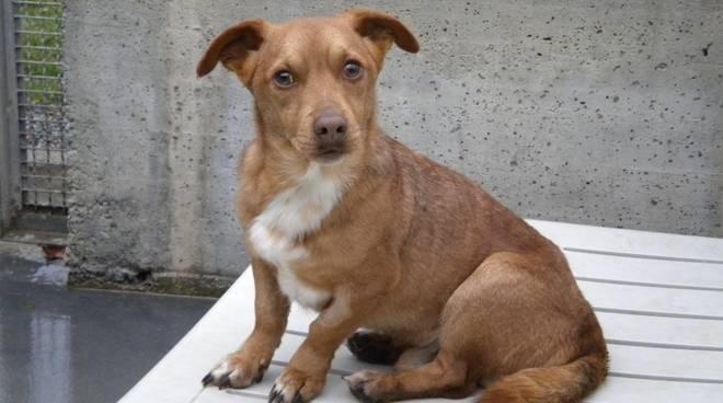 Lory, cane canile Cairo