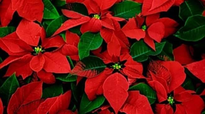 Una stella di Natale contro la leucemia