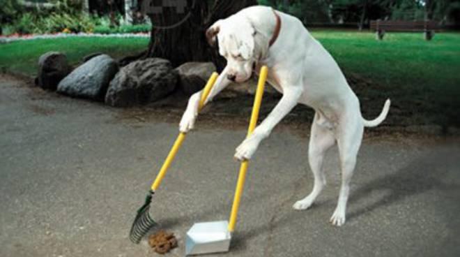 cane che pulisce