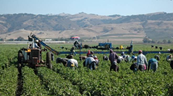 immigrati lavoro stagionale agricoltura stranieri
