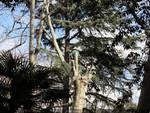 Protesta contro taglio alberi Acquasola