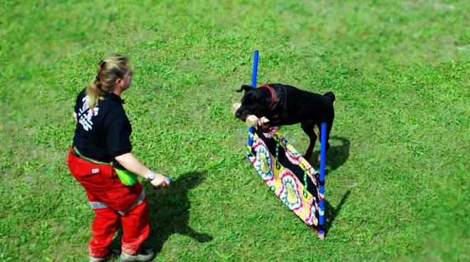 agility cani