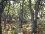 bosco, sughereta