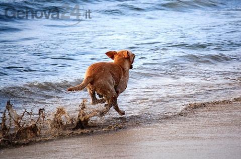 cane corre