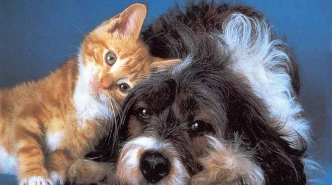 Cani e gatti non diffondono il Coronavirus: panico e disinformazione causano abbandoni