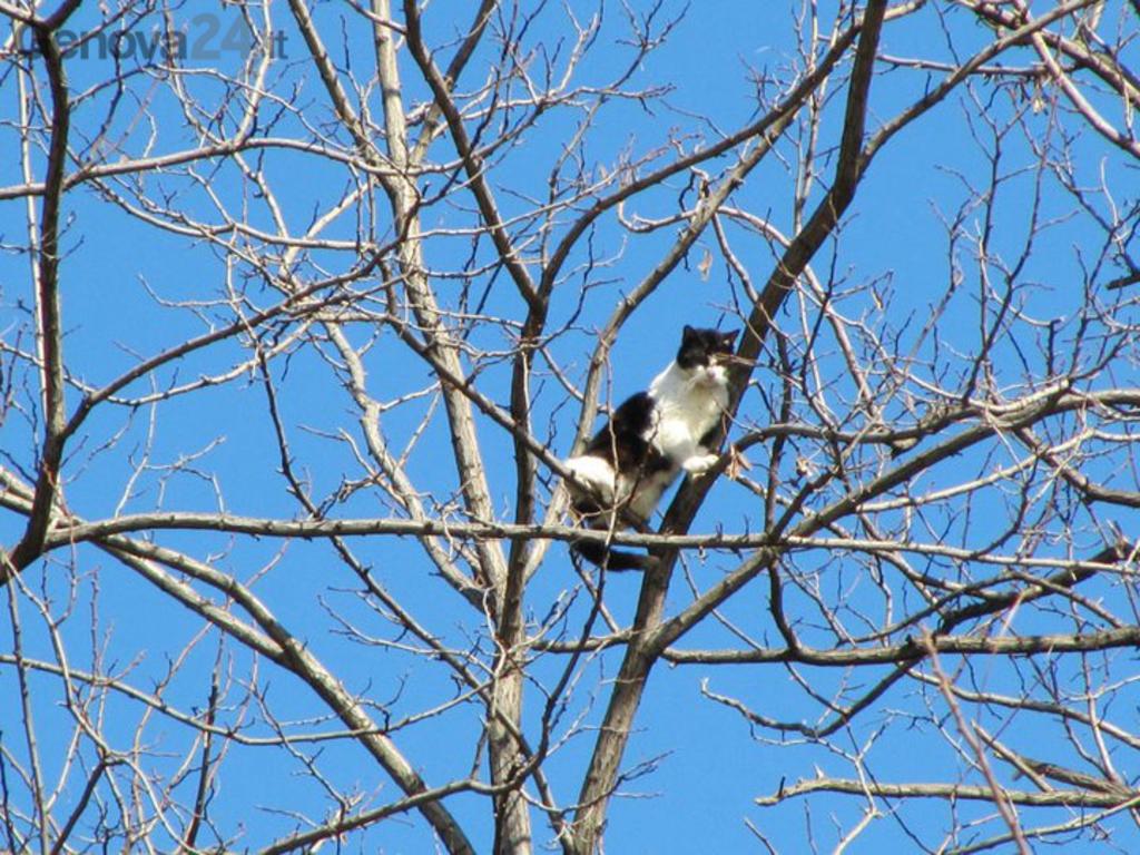 gatto albero vigili