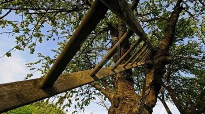 scala albero