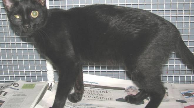 gattina abbandonata Enpa
