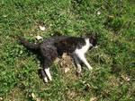 gatto avvelenato avvelenamento