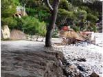 Punta Murena, alberi pericolanti