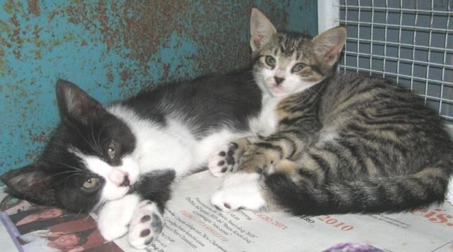 gattini abbandonati a Savona
